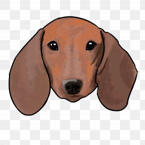 Puppy - Dachshund Harrier Treeing Walker Coonhound Boxer Mexican Hairless Dog PNG