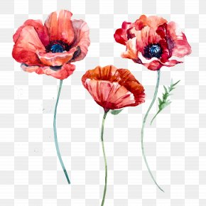Watercolor Poppies - Poppy Flowers PNG