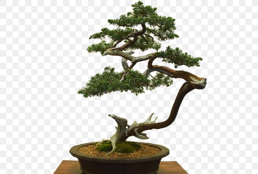 Sageretia Theezans Literati Style Penjing Chinese Bonsai Masterworks Flowerpot Tree Png 500x555px Sageretia Theezans Bonsai Branch