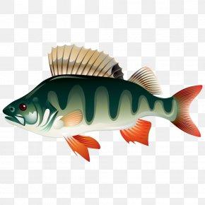 Cartoon Cute Little Fish - Watercolor Painting Cartoon Illustrator Illustration PNG