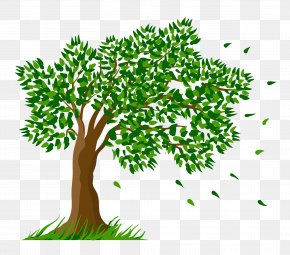 Tree Transparent Clipart Picture - Tree Clip Art PNG