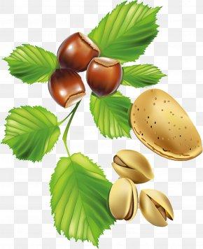 Pistachios - Fruit Blueberry Nut PNG