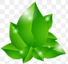 Vector Green Leaves - Green Euclidean Vector Leaf Blue Illustration PNG