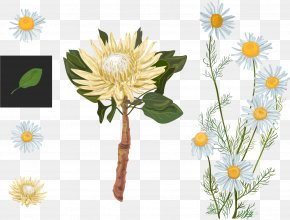 Vector Variety Of Chrysanthemum - Protea Cynaroides Euclidean Vector Flower Watercolor Painting PNG