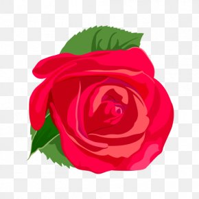 Red Rose Vector - Rose Flower Euclidean Vector PNG