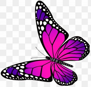 Butterfly Pink And Purple Transparent Clip Art Image - Butterfly Purple Clip Art PNG