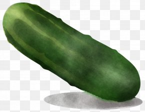 Cucumber Gourd And Melon Family Cucumis - Vegetable Green Plant Cucumber Food PNG