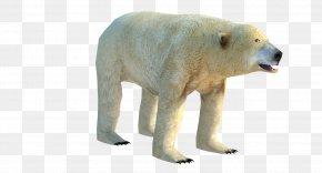 Polar Bear - Polar Bear Low Poly 3D Computer Graphics Wavefront .obj File PNG