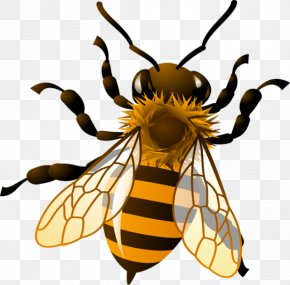 Easy Insect Cliparts - Western Honey Bee Bumblebee Royalty-free Clip Art PNG