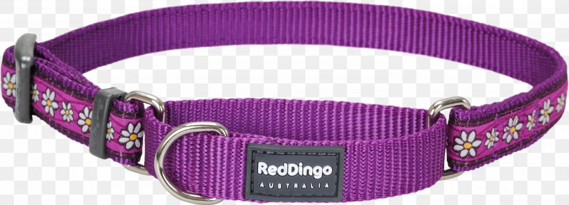 Dog Collar Dingo Martingale Bull Terrier (Miniature), PNG, 3000x1080px, Dog Collar, Bull Terrier Miniature, Collar, Dingo, Dog Download Free