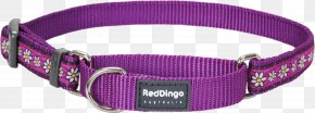 Dog With Collar - Dog Collar Dingo Martingale Bull Terrier (Miniature) PNG