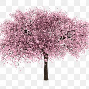 Cherry Blossom - National Cherry Blossom Festival Clip Art PNG
