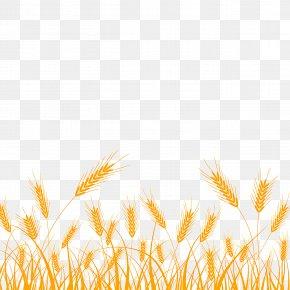 Khorasan Wheat Wheat - Wheat PNG