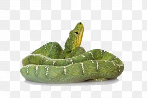 Green Snake File - Smooth Green Snake Reptile Amazing Animals: Snakes PNG