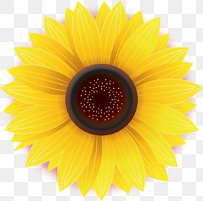 Flower - Common Sunflower Daisy Family Yellow Stock Photography PNG