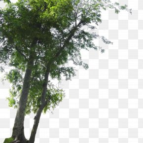Landscape Foreground Tree - Tree Landscape PNG