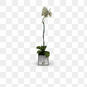 White Flowers Fresh Bouquet - 3D Computer Graphics 3D Modeling Flower PNG