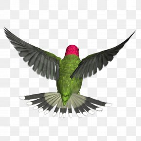 Bird - Hummingbird Clip Art PNG