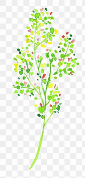 Green Tree - Twig Green Tree Color PNG