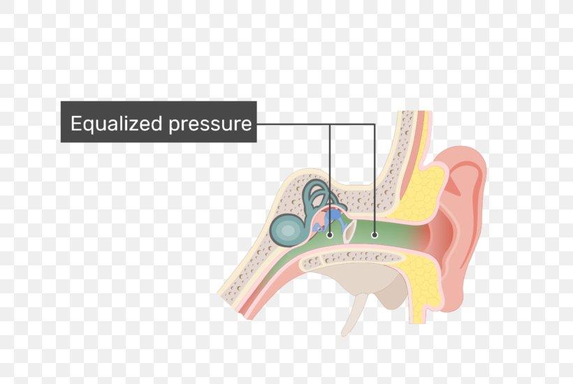 Eustachian Tube Middle Ear Pharynx Ossicles, PNG, 770x550px, Eustachian Tube, Anatomy, Auditory System, Bone, Ear Download Free