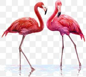 Two Flamingos - Flamingo Illustration PNG