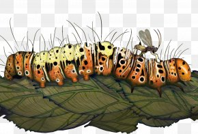 Beautiful Caterpillar Crawling On A Leaf - The Wasp That Brainwashed The Caterpillar: Evolutions Most Unbelievable Solutions To Lifes Biggest Problems Darwin Comes To Town QUAKER COLONIES A CHRONICLE OF The Quaker Colonies PNG