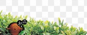 Tea Tea Teapot - White Tea Oolong Teapot PNG