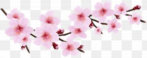Blossom Spring Pink Twig Transparent Clip Art Image - Cherry Blossom Pink Blossoms Resorts Icon PNG