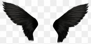 Wings - Wing Stock Photography PNG