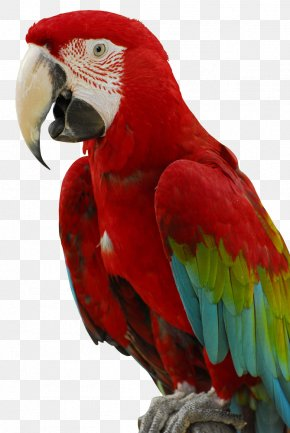 Parrot - Cockatiel Bird Cockatoo Parakeet Chew Toy PNG