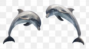 Dolphin Transparent - Dolphin Clip Art PNG