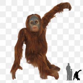 Orangutan - Chimpanzee Gorilla Bornean Orangutan Primate Sumatran Orangutan PNG