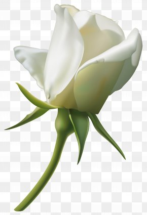 Beautiful White Rose Bud Clipart Image - Rose White Clip Art PNG