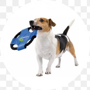 Puppy - Dog Breed Jack Russell Terrier 养狗 Puppy PNG