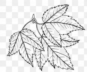 Leaves Doodle - Drawing Line Art Doodle Digital Department Manager PNG