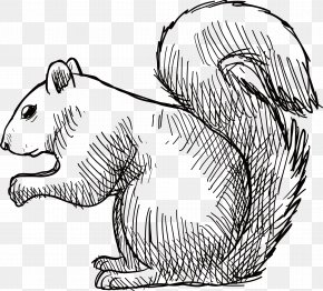 Hand-painted Rat Vector - Tree Squirrel Rubber Stamp Vecteur Eastern Gray Squirrel PNG