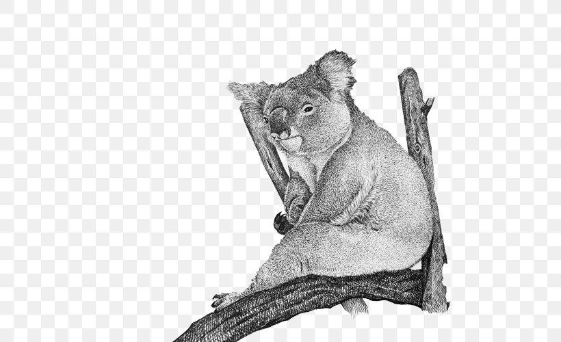 Cougar Cat Whiskers Koala Fur, PNG, 500x500px, Australia, Big Cats, Black And White, Carnivoran, Cat Like Mammal Download Free