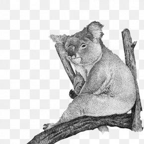 Koala Daze Pen Drawing Material Picture - Cougar Cat Whiskers Koala Fur PNG