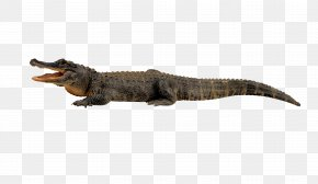 Crocodile - Nile Crocodile Alligator Clip Art PNG