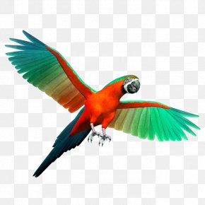 Colored Parrot - Parrot Birdcage Cockatiel Budgerigar PNG