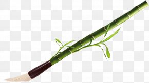 Bamboo - Plant Stem PNG