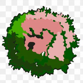 Tree Top View - Tree Drawing Clip Art PNG