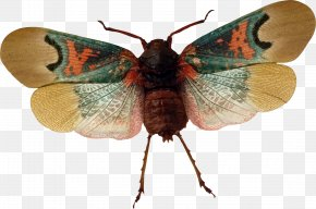 Insect - Butterfly Insect Arthropod Moth PNG