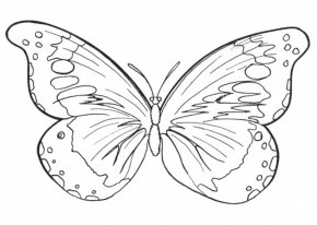 Outlines Of Butterflies - Butterfly Coloring Book Drawing Clip Art PNG