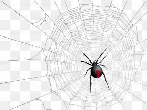 Halloween Transparent Net And Spider Picture - Widow Spiders Insect Symmetry Pattern PNG