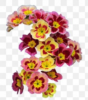 Flowers Background - Flower Primrose Spring Wreath Garland PNG