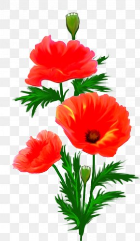 Anemone - Picture Frames Flower Photography Clip Art PNG