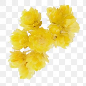 Petal Cut Flowers - Yellow Flower Plant Cut Flowers Petal PNG
