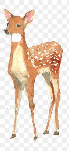 Hand-painted Watercolor Deer - Framed Deer Kindergarten : Animals Watercolor Painting Poster PNG