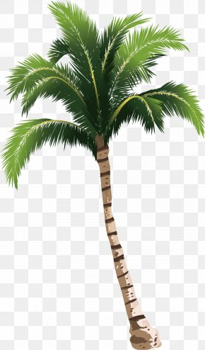 A Coconut Tree PNG
